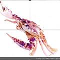 250_C1733_梭子蟹科_鏽斑蟳