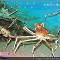 180_C1583_尖頭蟹科_甘氏巨螯蟹