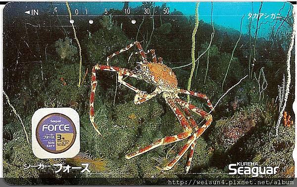 180_C1588_尖頭蟹科_甘氏巨螯蟹