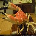 200907_日本_螃蟹標本_巨大擬濱蟹_2