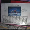 IMG_4554_人面蟹