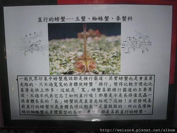 IMG_4557_直行的螃蟹