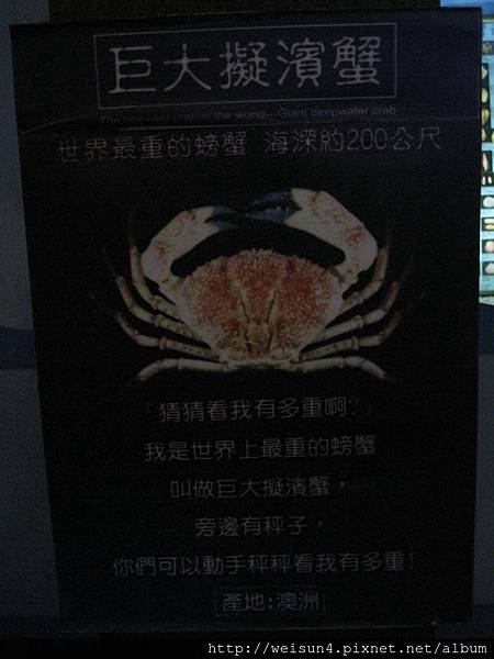 IMG_4560_巨大擬濱蟹