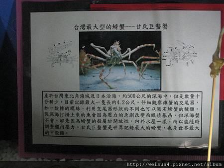 IMG_4561_甘氏巨螯蟹