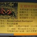 IMG_4601_斯氏新脹蟹