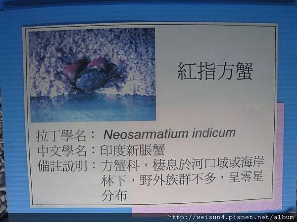 IMG_4607_印度新脹蟹