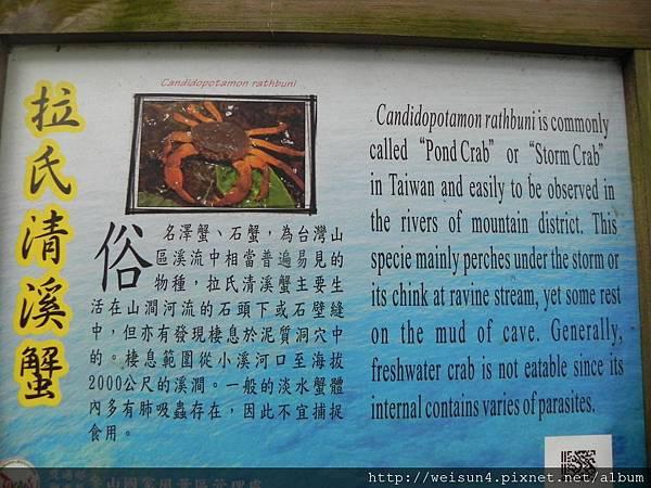 蓬萊溪_看板_拉氏清溪蟹
