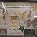 DSCN4782_非洲大長尾水青蛾