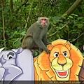 DSCN5189_台灣彌猴