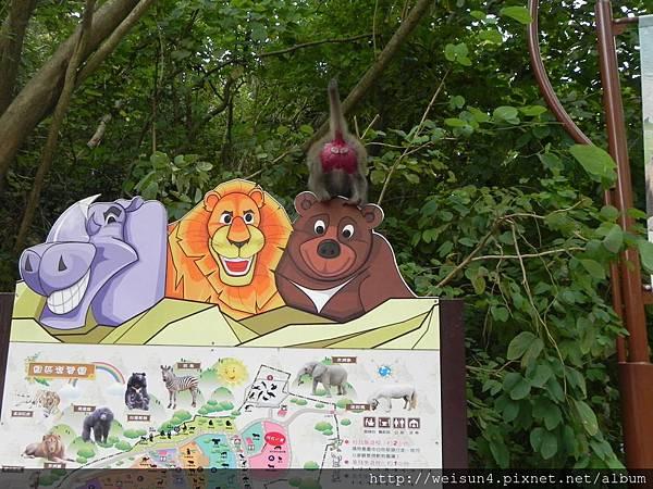 DSCN5192_台灣彌猴