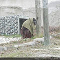 DSCN5213_紅毛猩猩