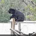 DSCN5229_台灣黑熊