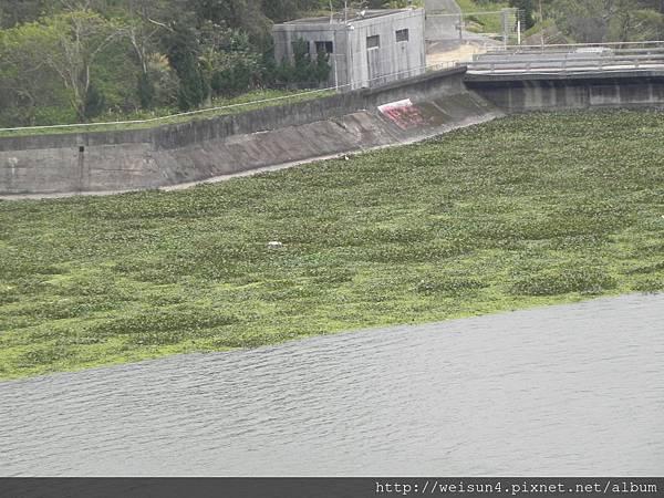 DSCN4298_大埔水庫(峨眉湖畔)