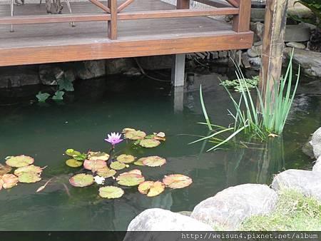 DSCN4310_水池