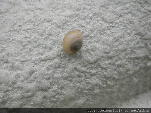 DSCN4336_蝸牛