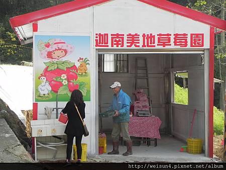 DSCN8353_迦南美地草莓園