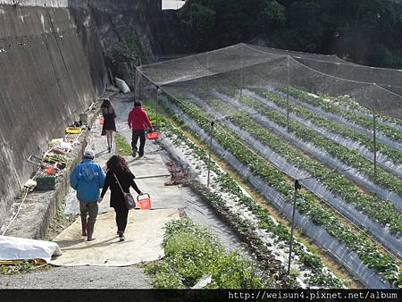DSCN8355_迦南美地草莓園