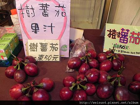 阿里山_DSCN9619_樹蕃茄