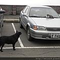 狗vs貓_20120108_飛鳳山