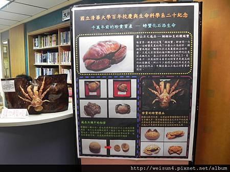 清大_DSCN7765_海報_螃蟹標本