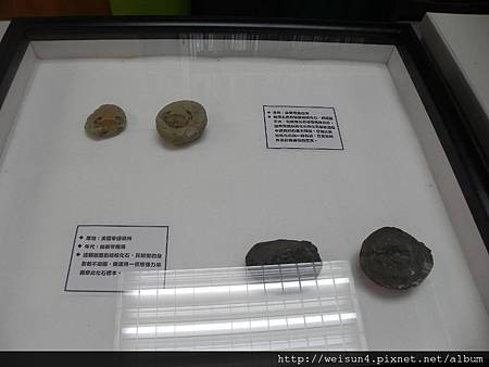 清大_DSCN7766_螃蟹化石