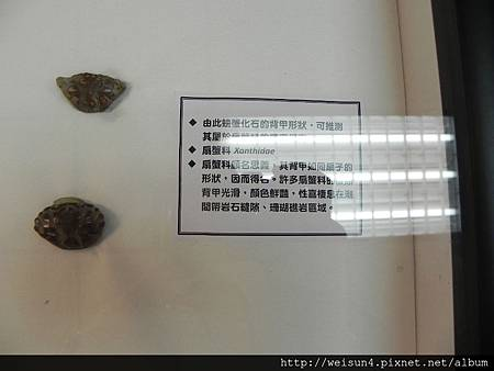 清大_DSCN7771_螃蟹化石