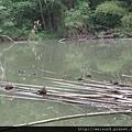 綠世界_IMG_7209_天鵝湖的鳥