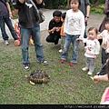 綠世界_IMG_7260_綠野廣場_輻射陸龜