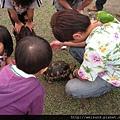 綠世界_IMG_7264_綠野廣場_輻射陸龜