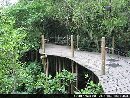 綠世界_IMG_7368_熱帶雨林空中步道