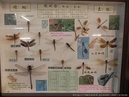 桃源仙谷_DSCN4785_蜻蜓+豆娘