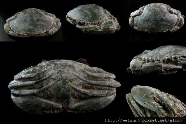 C2021_石螃蟹-2.jpg