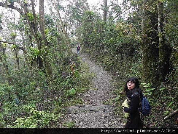 棲蘭山莊_DSCN9629_小泰山森林浴步道.JPG