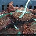甲殼綱_十足目_梭子蟹_鈍齒短槳蟹_20201029_基隆-和平島.JPG