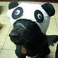 牛奶的熊貓裝1