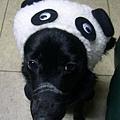 牛奶的熊貓裝2