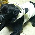 牛奶的熊貓裝3