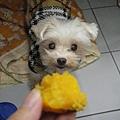 小莉愛吃蕃薯