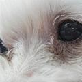 小莉莉側眼.JPG