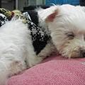 睡著莉.JP