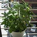 兔子&Milky的植物1_resize.jpg