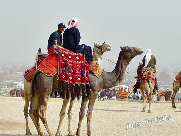 20100218騎駱駝00.jpg