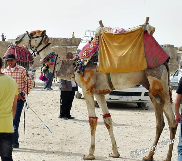 20100218騎駱駝01.jpg