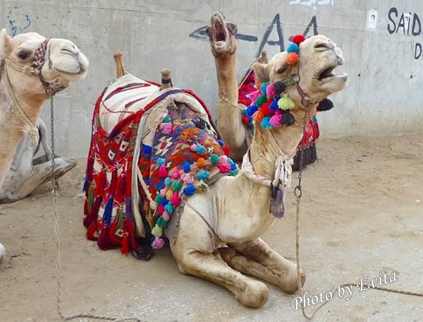 20100218騎駱駝03.jpg