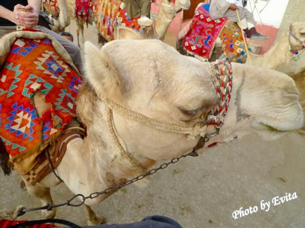 20100218騎駱駝04.jpg
