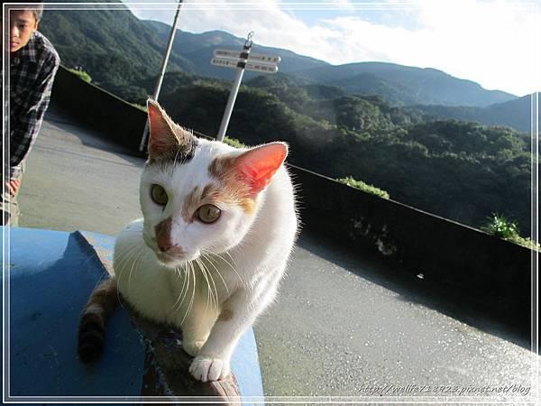 00067-07《侯硐貓村。碩仁國小》