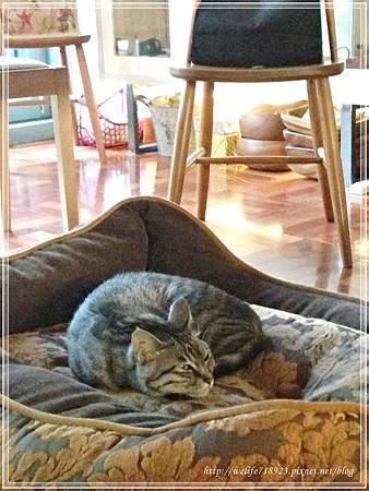 00078-08《拋夫棄子之人妻Brunch-屋頂上的貓私廚》.jpg