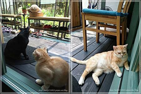 00078-20《拋夫棄子之人妻Brunch-屋頂上的貓私廚》.jpg