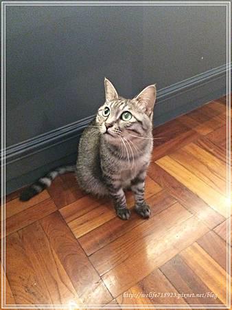 00078-27《拋夫棄子之人妻Brunch-屋頂上的貓私廚》.JPG