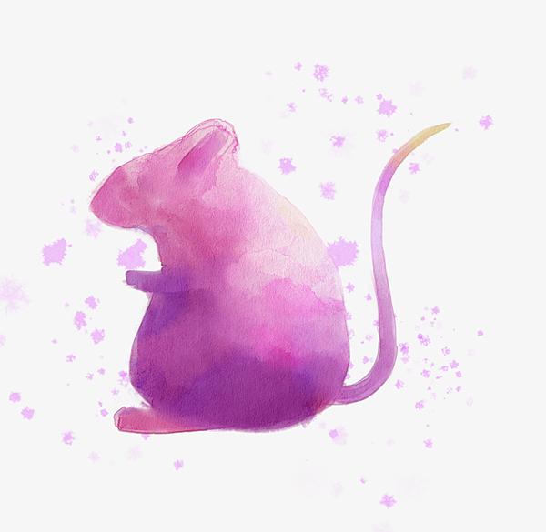鼠寶寶取名的小名禁忌